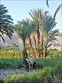 La campagne de Thèbes (Egypte) (6934759800).jpg