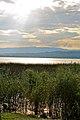 Lac de Morat (18).jpg