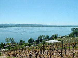 Lake Morat - Image: Lac de Morat 2003 05 04