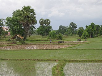 Rural society in Laos - Paddy fields in Laos