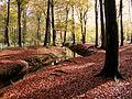 Laubfärbung im Herbstwald.JPG
