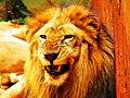 Leão - panoramio (6).jpg