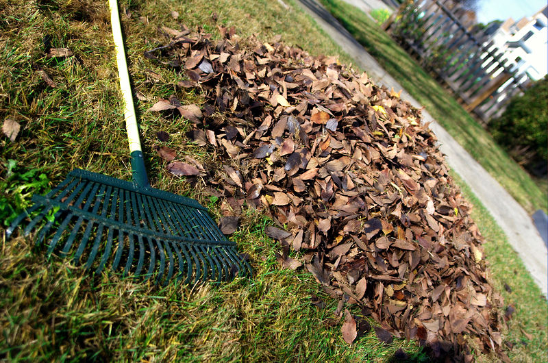 800px Leaf rake and leaves Shrewsbury Town Clean Up Day   April 5 Shrewsbury Massachusetts