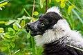 Lemur (26773392669).jpg