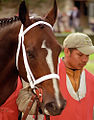 "Lexington Kentucky - Keeneland Race Track ""Paddock"" (2144539133) (2).jpg"
