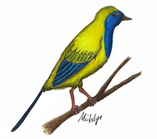 <i>Liaoxiornis</i> genus of birds (fossil)