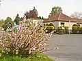 Lichtenrade - Fruehling (Springtime) - geo.hlipp.de - 35907.jpg