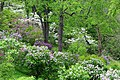 Lilac Walk at Arboretum of the RBG.jpg