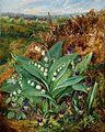 Lilies of the Valley - Albert Durer Lucas.jpg