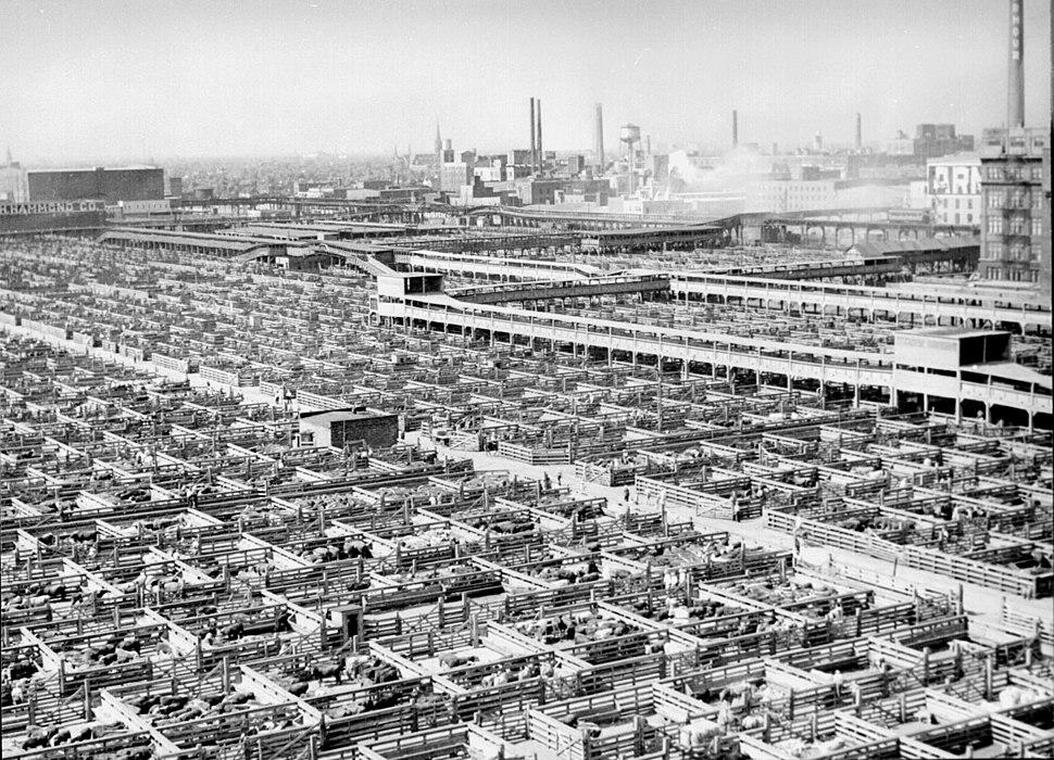 Livestock chicago 1947