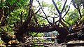 Living Root Bridge near Mawlynnong.jpg