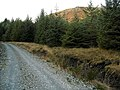 Loch Ard Forest - geograph.org.uk - 1058240.jpg