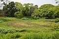 Lotus Pond - Indian Botanic Garden - Howrah 2013-03-31 5787.JPG