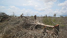 Madagascar spiny forest destruction 001.jpg