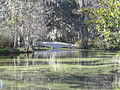 Magnolia Plantation and Gardens - Charleston, South Carolina (8555449561).jpg