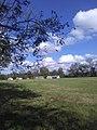 Magnolia Plantation skyline 02.jpg