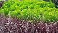 Malampuzha Gardens - panoramio (23).jpg