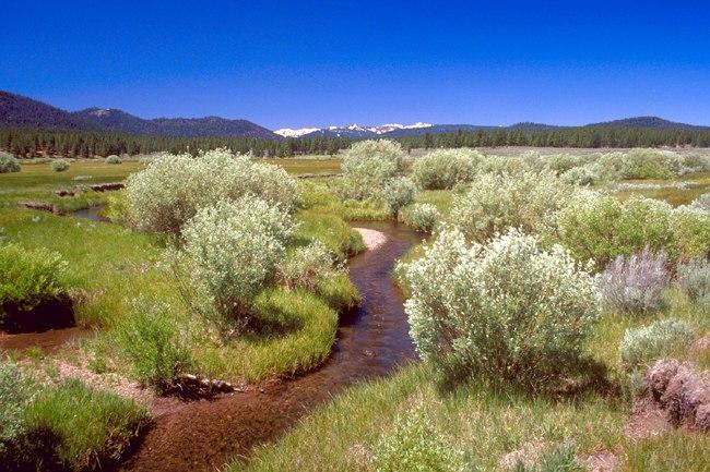 Martis Creek Wetland Project, California