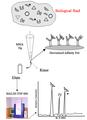 Mass Spectrometric Immunoassay.png