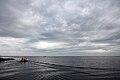 Matsalu laht 2.JPG