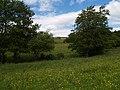 Meadow next to Lynn burn - geograph.org.uk - 1072509.jpg