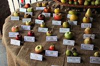 Varietà non comuni di mela.