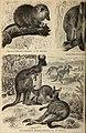Meyers Konversations-Lexikon - eine Encyklopädie des allgemeinen Wissens (1890) (14763621911).jpg