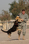 Military working dog training DVIDS141172.jpg