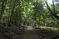 Minnamurra Rainforest - panoramio.jpg