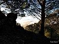 Mirando tras los árboles - panoramio.jpg