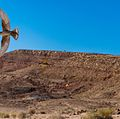 Mitzpe Ramon Birds at Mitzpe Ramon in Desert (15269646020).jpg