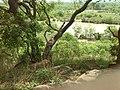 Mole vegetation.jpg