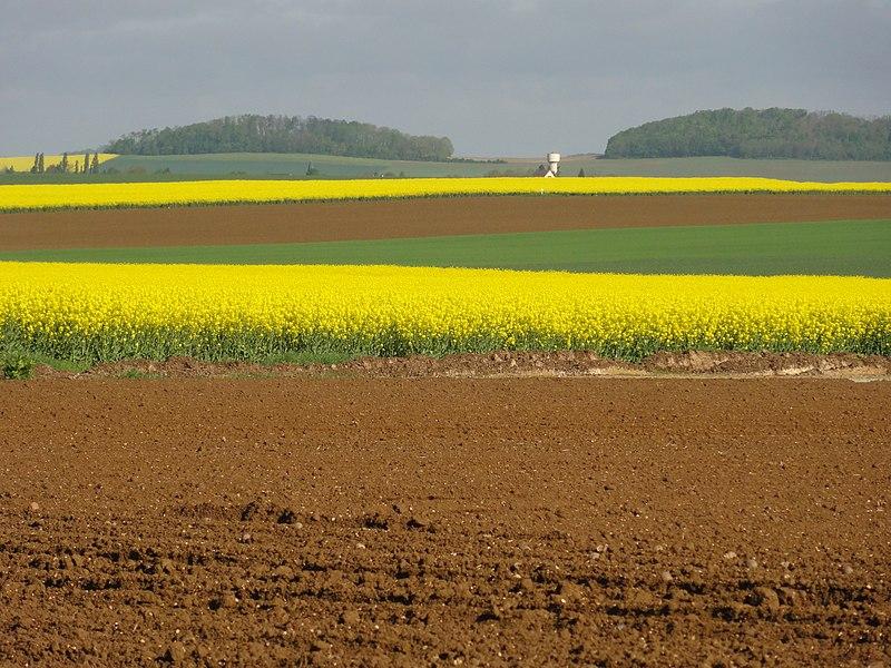Monceau-le-Waast (Aisne) paysage avec champs de colza