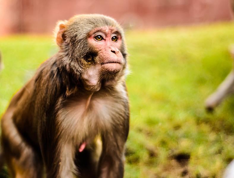 hiv, vaccine, hiv vaccine, monkey hiv, siv, monkey hiv vaccine