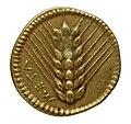 Monnaie en or, Lucanie, Métaponte, revers.jpg