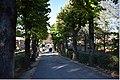 Montepulciano 47DSC 0641 (46753535005).jpg