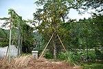 Monument statue & tree of Okuyamada Elementary school's site in Okuyamada, Ujitawara, Kyoto August 11, 2018.jpg
