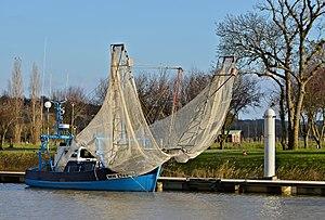 Mortagne-sur-Gironde Civellier Mayflowers 2013.jpg