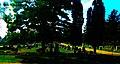 Mount Olivet Catholic Cemetery - panoramio.jpg