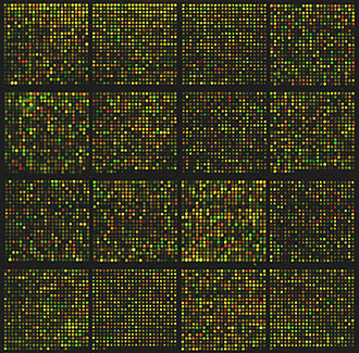Binary logarithm - A microarray for approximately 8700 genes. The expression rates of these genes are compared using binary logarithms.