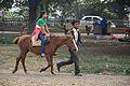 Mule Riding - Brigade Parade Ground - Kolkata 2013-01-05 2408.JPG