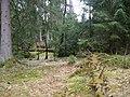 Mythos Wald trail Harz 01.jpg