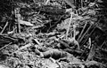 NLS Haig - Smashed up German trench on Messines Ridge with dead (cropped 2).jpg
