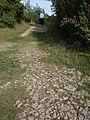 NSG Büchelberg - Wanderweg auf Kalkstein.jpg