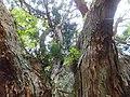 Nakamura, Kamiichi, Nakaniikawa District, Toyama Prefecture 930-0433, Japan - panoramio (1).jpg