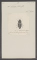 Nascio - Print - Iconographia Zoologica - Special Collections University of Amsterdam - UBAINV0274 023 06 0016.tif