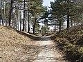 Nationaal Park Kennemerland (40655887944).jpg