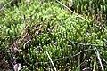 National nature reserve Soos in spring 2015 (19).JPG