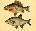 Naturgeschichte in Bildern mit erläuterndem Text (Taf. CXLI) (6058683881).jpg