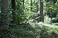 Naturschutzgebiet Haseder Busch - Im Haseder Busch (9).jpg